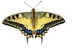 Κίτρινη πεταλούδα Στοκ Φωτογραφίες