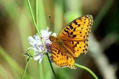 κίτρινη πεταλούδα Στοκ φωτογραφίες με δικαίωμα ελεύθερης χρήσης