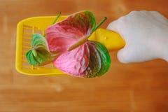 Κίτρινη πλαστική σέσουλα για τα απορρίματα γατών που καθαρίζουν whith το anthurium λουλούδι - συμπαθητική μυρωδιά και καμία έννοι Στοκ φωτογραφίες με δικαίωμα ελεύθερης χρήσης