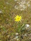 Κίτρινη στενή επάνω κίτρινη χλόη λουλουδιών στοκ εικόνες με δικαίωμα ελεύθερης χρήσης
