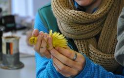 Κίτρινη συλβία που εξετάζεται για τη ζώνη Στοκ φωτογραφία με δικαίωμα ελεύθερης χρήσης