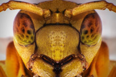 Κίτρινη σφήκα Selfie Στοκ φωτογραφίες με δικαίωμα ελεύθερης χρήσης