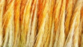 Κίτρινη σύσταση βουρτσών, φιαγμένη από φυσικές ίνες καρύδων φοινικών Στοκ φωτογραφίες με δικαίωμα ελεύθερης χρήσης