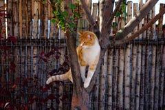 Κίτρινη τιγρέ γάτα σε ένα δέντρο στοκ εικόνες