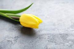 Κίτρινη τουλίπα Στοκ Εικόνες