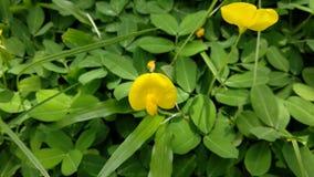 Κίτρινη χλόη Στοκ εικόνες με δικαίωμα ελεύθερης χρήσης