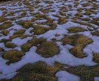 Κίτρινη χλόη και άσπρο χιόνι Στοκ φωτογραφία με δικαίωμα ελεύθερης χρήσης