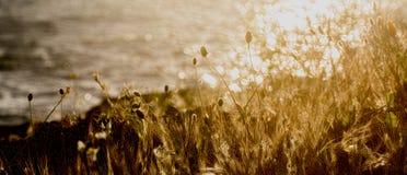 Κίτρινη χλόη Στοκ φωτογραφίες με δικαίωμα ελεύθερης χρήσης
