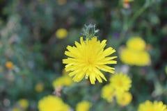 Κίτρινη ψυχή Στοκ εικόνες με δικαίωμα ελεύθερης χρήσης