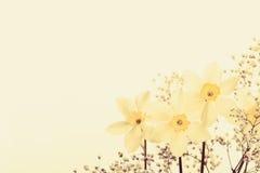 Κίτρινοι εκλεκτής ποιότητας λουλουδιών και όμορφος Στοκ Φωτογραφίες