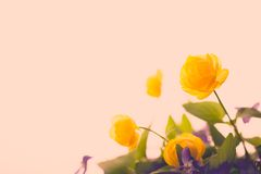 Κίτρινοι εκλεκτής ποιότητας λουλουδιών και όμορφος Στοκ Εικόνες