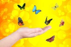 Κίτρινοι κύκλοι και πεταλούδα Στοκ εικόνες με δικαίωμα ελεύθερης χρήσης