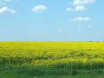 Κίτρινοι πεδίο και μπλε ουρανός Στοκ εικόνα με δικαίωμα ελεύθερης χρήσης