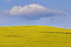 Κίτρινοι τομέας και σύννεφο συναπόσπορων στο μπλε ουρανό στοκ φωτογραφία με δικαίωμα ελεύθερης χρήσης
