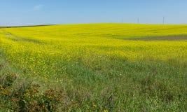 Κίτρινοι τομείς λουλουδιών στοκ φωτογραφία με δικαίωμα ελεύθερης χρήσης