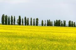 Κίτρινοι τομείς του canola Στοκ Εικόνα