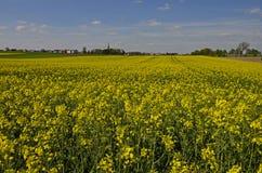 Κίτρινοι τομείς του canola Στοκ Εικόνες