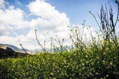 Κίτρινος άγριος τομέας λουλουδιών Στοκ Εικόνα