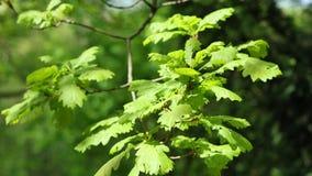 Κίτρινος, άνθισμα, συναπόσπορος, φυτό, γεωργία, λεπτομέρεια, άνθιση, άνθηση, καλλιέργεια, ΓΤΟ, βράδυ, ηλιοφάνεια, φως του ήλιου,  φιλμ μικρού μήκους