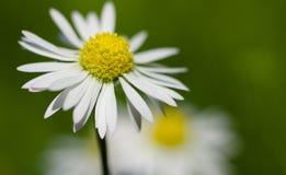 Κίτρινος άσπρος πράσινος Στοκ φωτογραφία με δικαίωμα ελεύθερης χρήσης