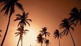 Κίτρινος ήλιος στον πορτοκαλιούς ουρανό και τους φοίνικες Ηλιοβασίλεμα πέρα από τους φοίνικες απόθεμα βίντεο