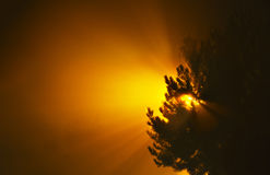Κίτρινος ήλιος με τις ακτίνες ήλιων που αυξάνονται επάνω πίσω από τα δέντρα πεύκων Στοκ εικόνες με δικαίωμα ελεύθερης χρήσης