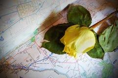 Κίτρινος αυξήθηκε του Τέξας στοκ εικόνες με δικαίωμα ελεύθερης χρήσης