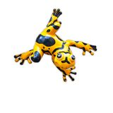 Κίτρινος βάτραχος στην άσπρη ανασκόπηση Στοκ Εικόνα