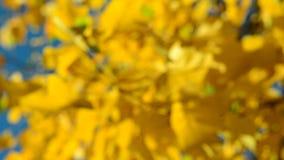 Κίτρινος βγάζει φύλλα στον αέρα, μπλε ουρανός απόθεμα βίντεο