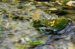 Κίτρινος βγάζει φύλλα τη στήριξη στο βρύο Στοκ Εικόνα