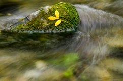 Κίτρινος βγάζει φύλλα τη στήριξη στο βρύο Στοκ φωτογραφία με δικαίωμα ελεύθερης χρήσης