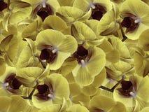 Κίτρινος-γκρίζος-βιολέτα ορχιδεών Υπόβαθρο των ορχιδεών λουλουδιών convolvulus σύνθεσης ανασκόπησης λευκό τουλιπών λουλουδιών ένα Στοκ φωτογραφίες με δικαίωμα ελεύθερης χρήσης
