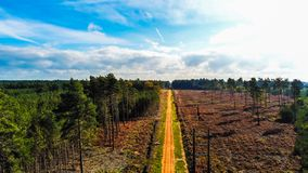 Κίτρινος δρόμος τούβλου στο δάσος Swinley, Μπερκσάιρ στοκ εικόνες με δικαίωμα ελεύθερης χρήσης