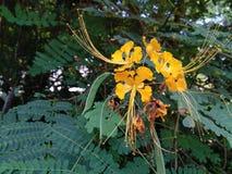 Κίτρινος εκτεθειμένος γύρη ανθήρας λουλουδιών στοκ εικόνες με δικαίωμα ελεύθερης χρήσης