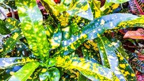 Κίτρινος-επισημασμένο φύλλο Στοκ Φωτογραφίες