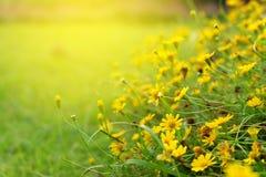 Κίτρινος ζωηρόχρωμος τομέας λουλουδιών κοπτών στοκ εικόνες με δικαίωμα ελεύθερης χρήσης