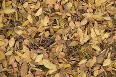 Κίτρινος και καφετής εξασθενίστε τα πεσμένα φύλλα στοκ εικόνα