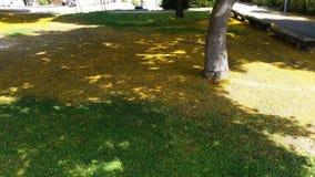 Κίτρινος και πράσινος στην αρμονία Στοκ Εικόνες