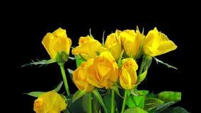 Κίτρινος κύβος τριαντάφυλλων, χρόνος-σφάλμα με το άλφα κανάλι φιλμ μικρού μήκους