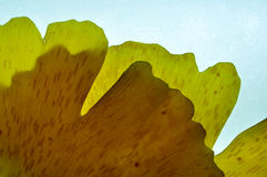 Κίτρινος με τις αφηρημένες μορφές Στοκ φωτογραφίες με δικαίωμα ελεύθερης χρήσης