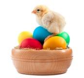 Κίτρινος νεοσσός με τα αυγά Πάσχας. απομονωμένος Στοκ Εικόνες