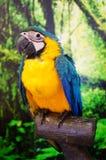 Κίτρινος παπαγάλος στη Βουλή Στοκ Εικόνες