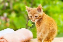 Κίτρινος, πορτοκάλι λίγη γάτα με τη ρόδινη πετσέτα Στοκ Φωτογραφίες