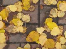 Κίτρινος δρόμος φύλλων Στοκ Φωτογραφίες