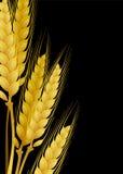 Κίτρινος σίτος Στοκ φωτογραφία με δικαίωμα ελεύθερης χρήσης