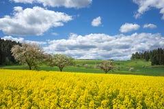 Κίτρινος τομέας βιασμών στο ανθίζοντας αγροτικό τοπίο Στοκ Φωτογραφία