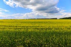 Κίτρινος τομέας, μπλε ουρανός με τα σύννεφα, απλό όμορφο τοπίο Στοκ Φωτογραφία