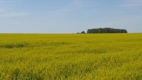Κίτρινος τομέας συναπόσπορων ενάντια σε έναν μπλε ουρανό φιλμ μικρού μήκους
