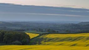 Κίτρινος τομέας Rapessed στην άνοιξη απόθεμα βίντεο