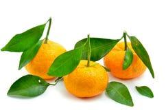 Κίτρινος του πορτοκαλιού από την κινεζική χώρα Στοκ εικόνες με δικαίωμα ελεύθερης χρήσης